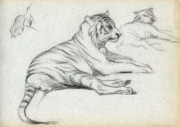 adolphe-thomasse-1850-1930-peintre-animalier-ami-de-erg-210-x-315-craie-noire-etude-de-tigre-2