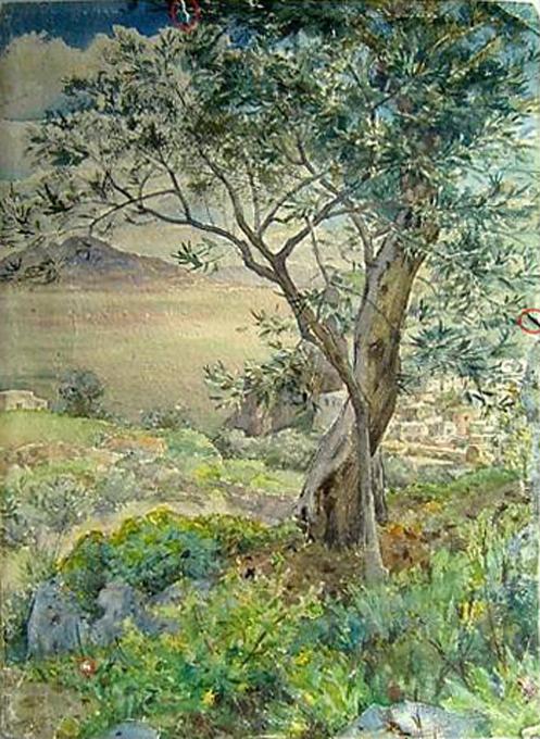 e-rosset-granger-aquarelle-350-x-250-cote-dazur-olivier-surplombant-un-village