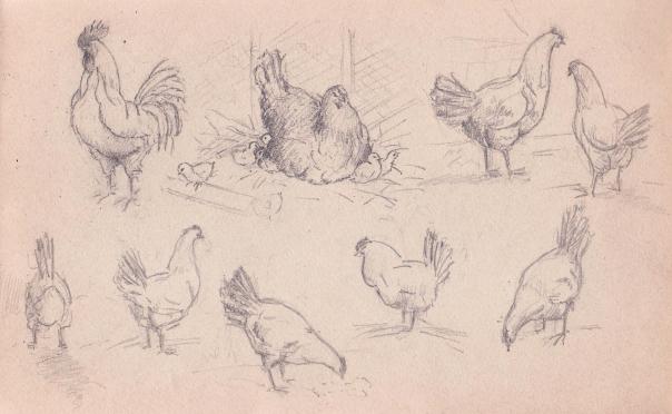 e-rosset-granger-carnet-de-croquis-1919-132-x-220-etude-de-poules-crayon-noir