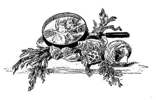 e-rosset-granger-illustration-09-1886-le-docteur-modesto-19-page-300-cul-de-lampe-representant-une-loupe-et-des-fruits-de-mer-septembre-1886
